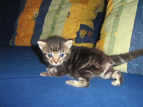 katze suchen ein zuhause junge katzen kinder kitten suchen ein liebevolles zuhause