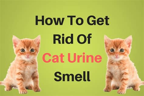 how to get rid of pee smell on bed how to get rid of pee smell on bed 28 images how to