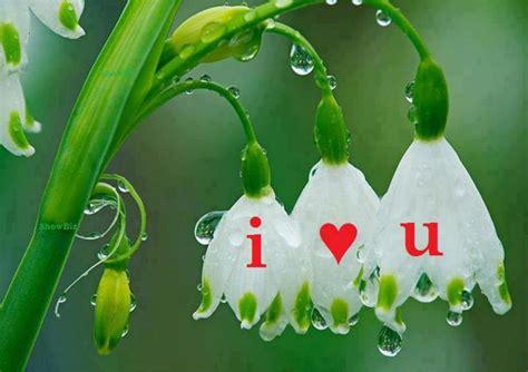wallpaper flower love wallpaper desktop love flower