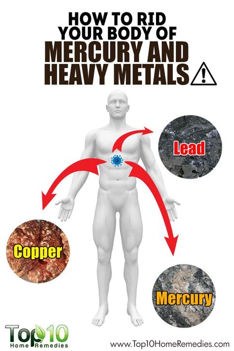 Best Ways To Detox Heavy Metals by How To Remove Heavy Metals From Your Heavy Metal