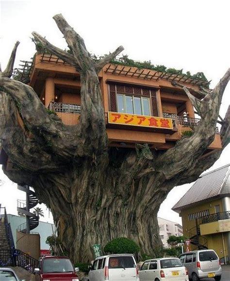 the ten top tree house tree houses the world s top 10 amazing tree houses