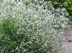 baby s breath gypsophila wedding flowers pinterest