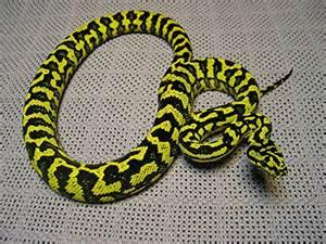 teppich dschungel 11 best images about carpet python on shops