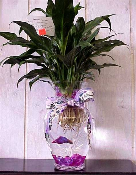 Betta Fish Vase by Frugal Fish Tanks Part 1 Penniless Parenting