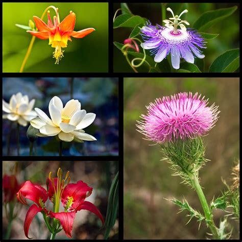 huge update all new north american native wildflower galleries