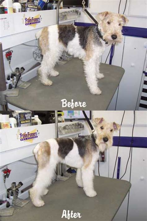 mobile grooming mobile grooming cuts time and fur healthy paws pet insurance