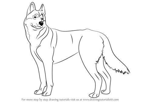 how to a husky puppy learn how to draw a husky dogs step by step drawing tutorials