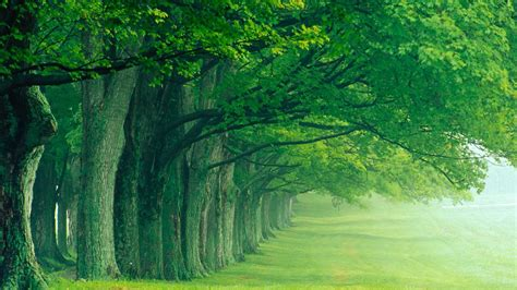 wallpaper for green environment all green trees in one line and living toward one