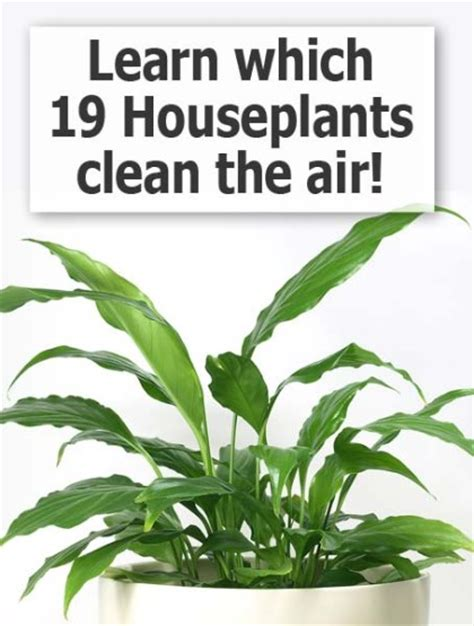 indoor plants to clean air michigan loses right to farm this week a farewell to
