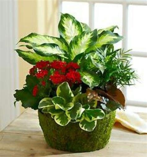 house plants 171 pentacles and pastries pinterest the world s catalog of ideas