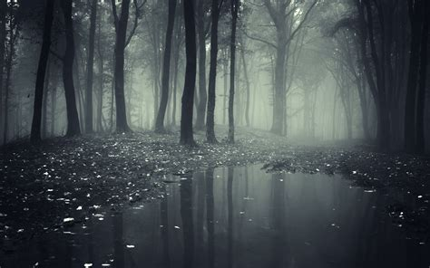 darkness beautiful dark themes dark scary forest wallpaper wallpapersafari