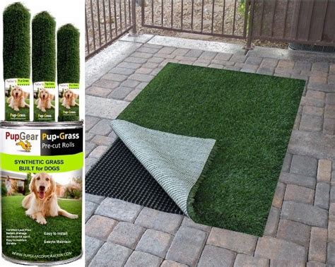 best 25 grass for dogs ideas on