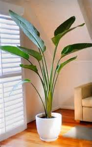 Indoor Plant Decoration by 25 Best Ideas About Indoor Plant Decor On Pinterest