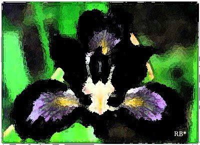imagenes orquideas negras fotos orquidea negra imagens orquidea negra clickgr 225 tis