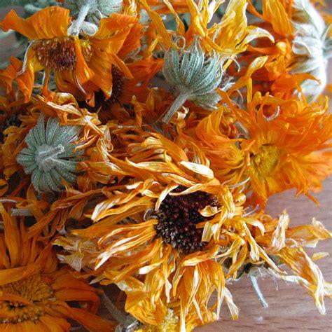 calendula officinalis flora verdura a resource for herbalist gardeners