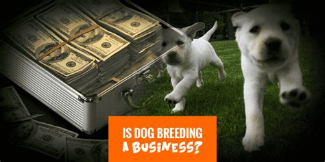when does a puppy become a when does become a business