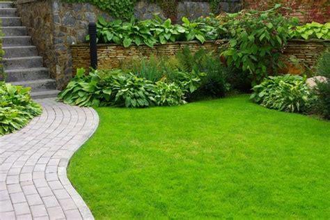 tips menanam tanaman rumput taman sakti desain