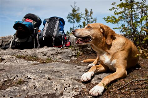 hiking dogs lyme disease in dogs healthy paws