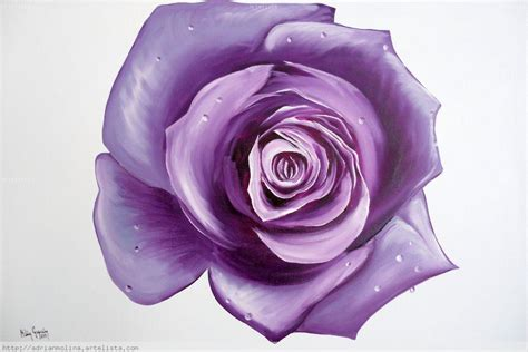 imagenes de rosas moradas y azules significado rosas moradas en whatsapp