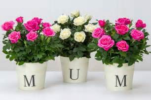Flowers For Mother S Day by When Is Mother S Day In America 5 Best Flower Deals Ahead