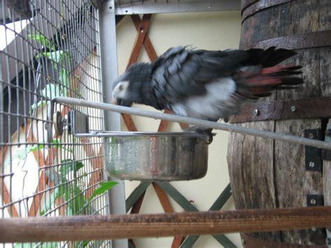 baignoire et tonneau abri pour perroquets forum sur l