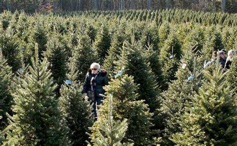ingraham christmas tree farm things come in trees photos portland press herald
