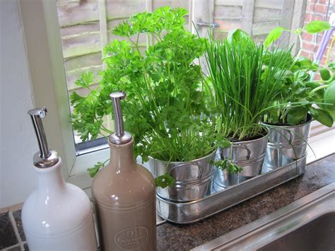 garden in the kitchen indoor herb garden ideas