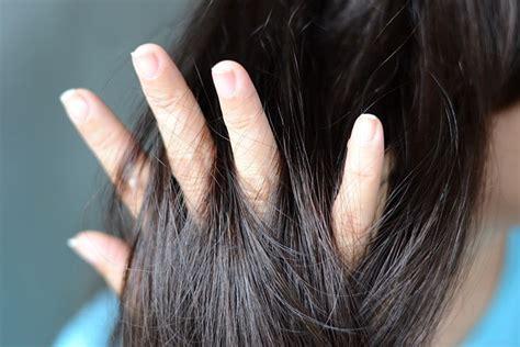 cosas y pelo 8415916221 cabello seco 5 tratamientos caseros para regresarle el brillo al cabello contra la caida del