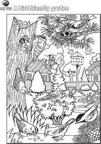 secret garden colouring book canada 80 coloring pages of wetland animals grassland