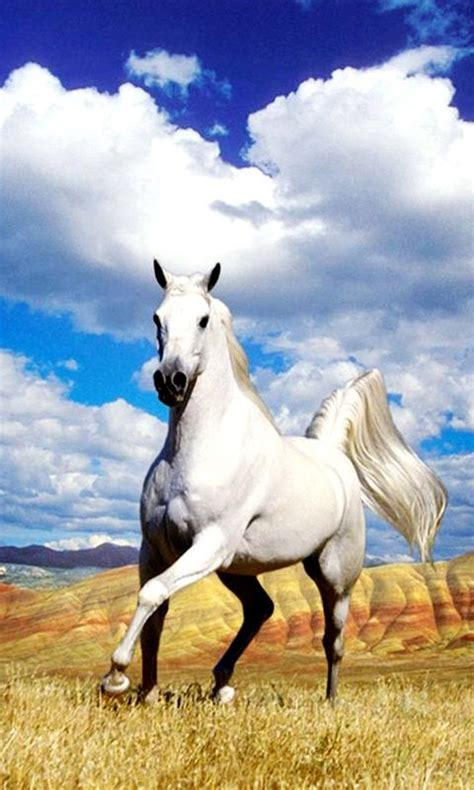google themes horse horse live wallpaper android apps on google play