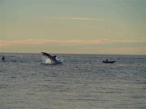 whale lands on boat whale lands on boat sailing forums page 1