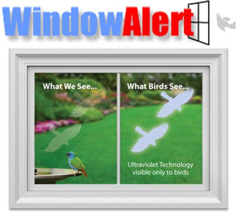 window alert bird collision decals transparent hawk