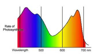 Diagrammatic representation of the spectrum of visible light, from