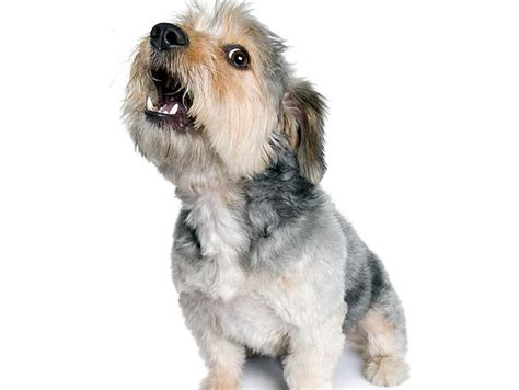 dog barks when we leave how to stop your pet s incessant barking pets grooming