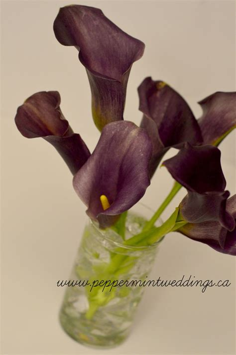 simple purple calla centerpiece peppermint