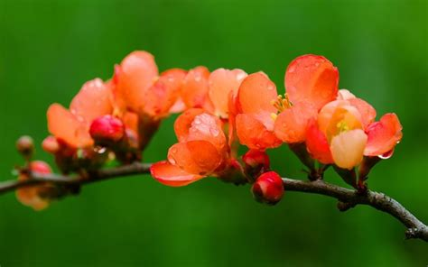 cespugli da fiore potatura degli arbusti da fiore tecniche di giardinaggio