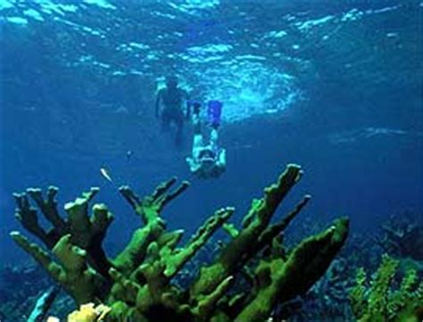 glass bottom boat biscayne national park food gifts lodging tours partnerships u s national