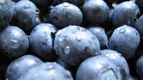 blueberry wallpaper blueberries closeup hd wallpaper 187 fullhdwpp full hd