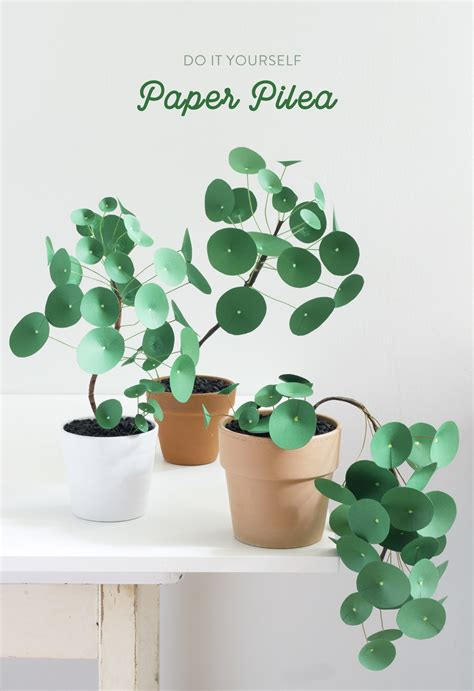 Which Plant Is Used To Make Paper - the apple of my diy