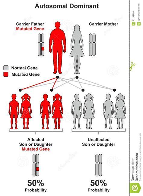 dominant son autosomal dominant hereditary trait stock vector