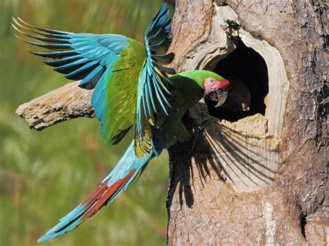 17 best images about parrots in the wild on pinterest