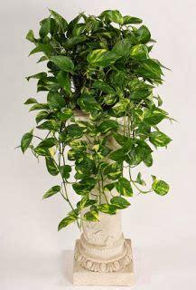 indoor plants images indoor plants plants