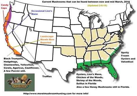 morel map 17 best images about edibles on the plant edible plants and the