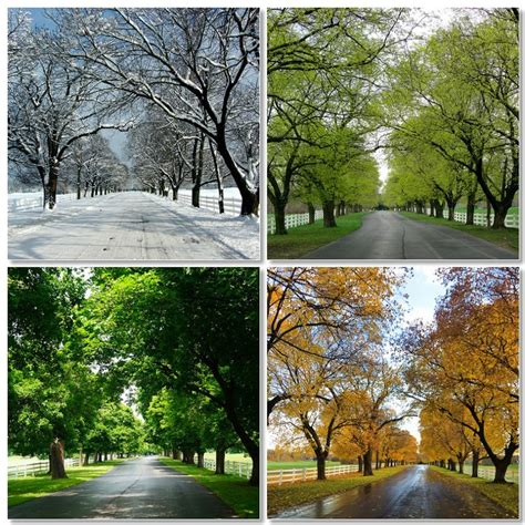 Four Seasons by Seasons Of The Year Tree Www Imgkid The Image Kid