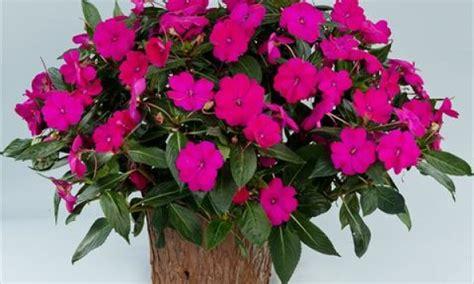 fiori stagionali fiori stagionali a lecce azienda agricola di
