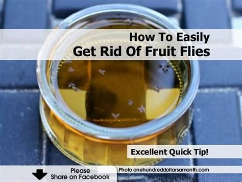 How Can I Get Rid Of Flies In Backyard by How To Easily Get Rid Of Fruit Flies