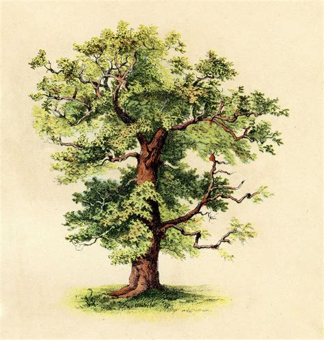 vintage tree antique clip beautiful tree the graphics