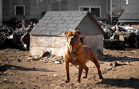 junkyard dogs junkyard dogs darwin dogs