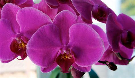 plantgasm repotting a phalaenopsis orchid