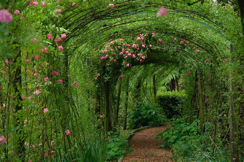 beauty garde beauty canopy flowers gardeb garden gardens image